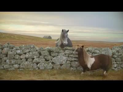La danse du poney