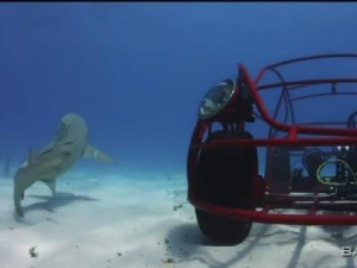 A la rencontre des requins en Volkswagen Beetle