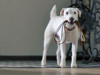 Un chien imite la Golf 7 dans un spot TV
