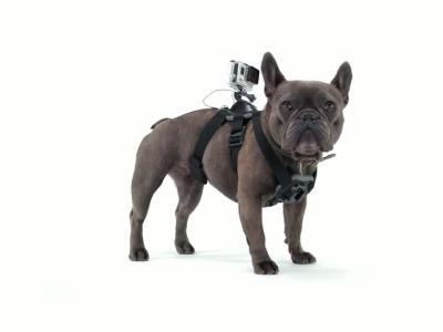 GoPro : pour les chiens aussi !