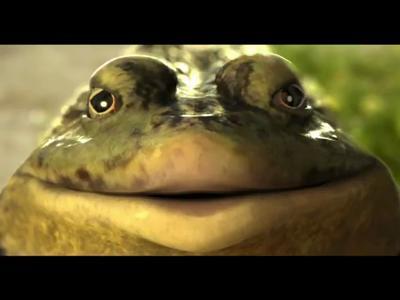 une grenouille qui sait ce qu'elle veut