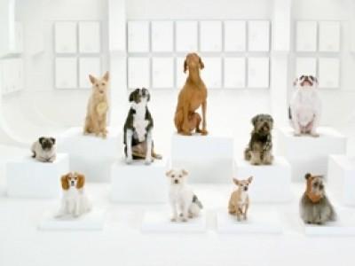 La marche impériale de la Guerre des Etoiles, version canine