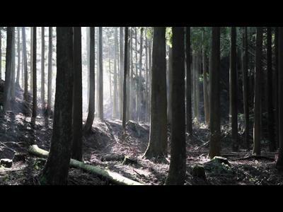 Docomo dans les bois...
