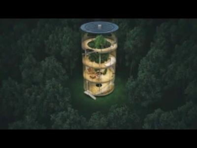 Tree in the house, une maison écologique construite autour d'un arbre