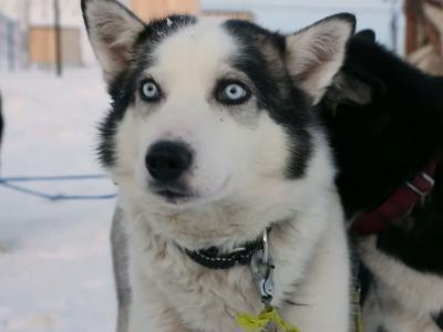 Embarquez pour le Pôle Nord, au Svalbard