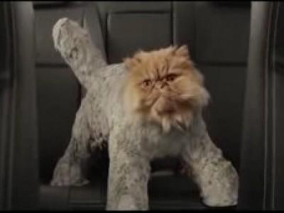 Un chat, une Toyota, des cascades et de l'humour