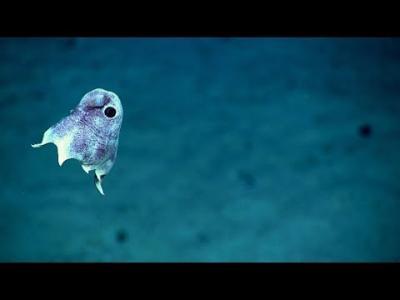 Les profondeurs de l'océan