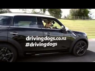 Insolite : des chiens qui apprennent à conduire !