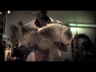 Qui... du chat ou de la tartine ?