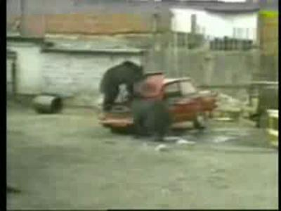 La brigade de démolition des ours