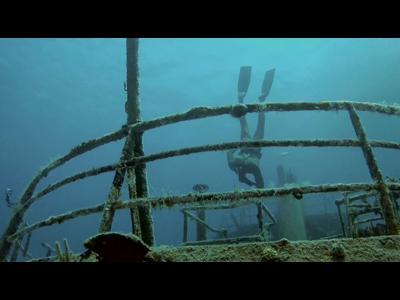 Un vol aquatique avec des requins-tigres